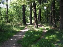 В лесу под Правдинском заблудились две женщины и школьница