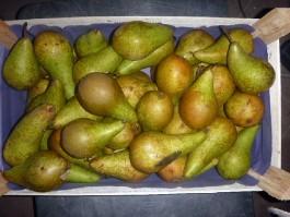 В Калининградской области уничтожили более семи тонн овощей и фруктов из ЕС