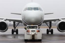 СМИ: Самолёт из Калининграда в Петербург на три часа задержали из-за птицы
