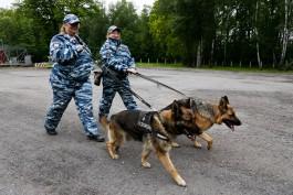 Полиция Калининграда нашла новых хозяев для собак, «уходящих на пенсию»