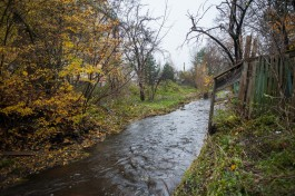 Власти Калининграда планируют вырубить деревья на берегах городских ручьёв