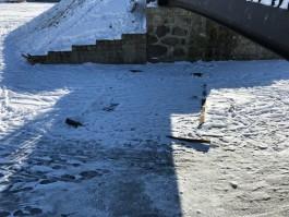 Что случилось с домиком для уток на озере Поплавок?