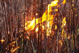 За сутки пожарные 77 раз выезжали на тушение палов травы в регионе