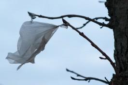 Мэрия: Вечером в Калининграде ожидается усиление ветра до 23 метров в секунду