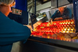 В Калининградской области планируют построить завод по производству яичного порошка