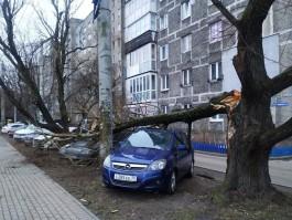 На Московском проспекте в Калининграде дерево упало на припаркованные машины