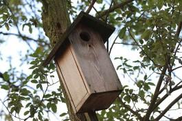 В Ботаническом саду Калининграда откроют сезон подкормки зимующих птиц